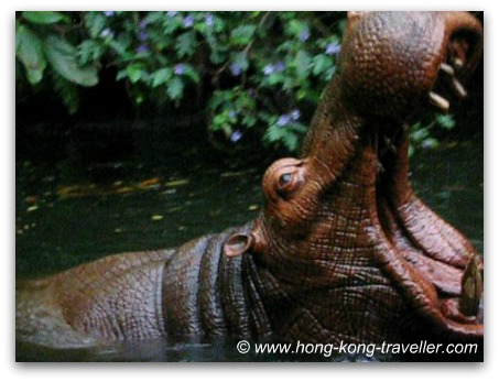 Hong Kong Disneyland - Adventureland - Jungle River Cruise