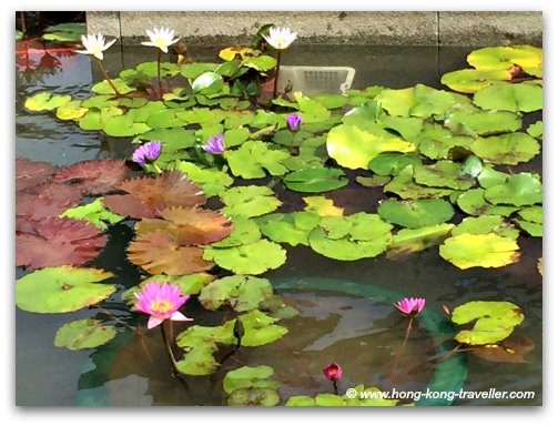 Lotus Ponds at the Chi Lin Nunnery