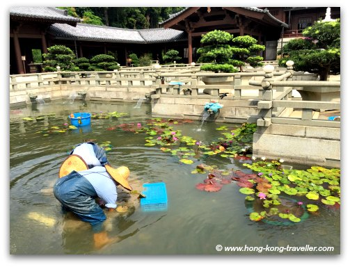 All courtyards, ponds are meticulously maintained at the Chi Lin Nunnery