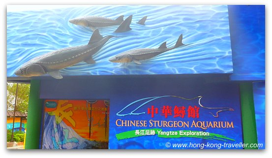 Chinese Sturgeon Aquarium Ocean Park