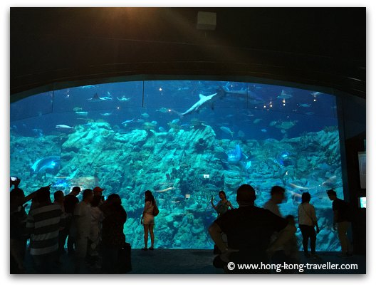 Sharks, Manta Rays, Hammerheads, Sting Rays... at the Ocean Park Grand Aquarium