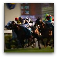 Hong Kong Horse Races