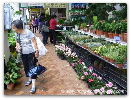 Hong Kong Flower Market Stands