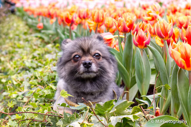 Dog enjoying the Blooms
