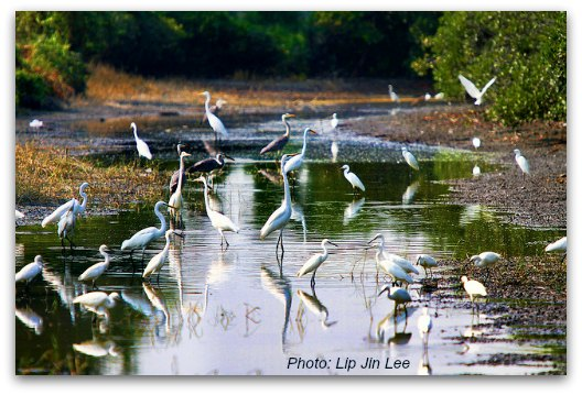 Beautiful Wading Birds at Mai Po Nature Reserve