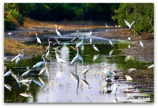 Hong Kong Nature and Wildlife: Migratory Birds flock to Mai Po Nature Reserve