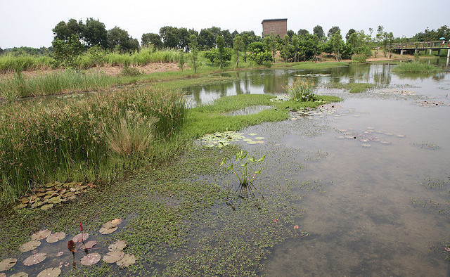 Hong Kong Wetland Park in the New Territories