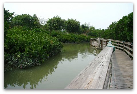 Hong Kong Wetland Park Mangrove Boardwalk