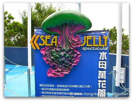 Jelly Fish Aquarium Ocean Park