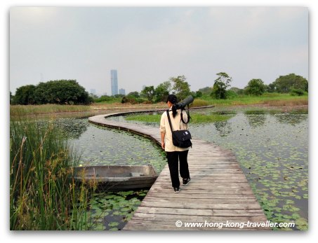 Mai Po Nature Reserve Lily Ponds