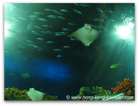 Ocean Park Grand Aquarium Reef Tunnel Dome