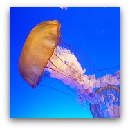 Ocean Park Highlights: The Jelly Fish Aquarium