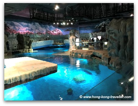 Ocean Park North Pole Encounter Seal Pools