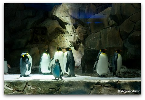 Penguins at Ocean Park Polar Adventure