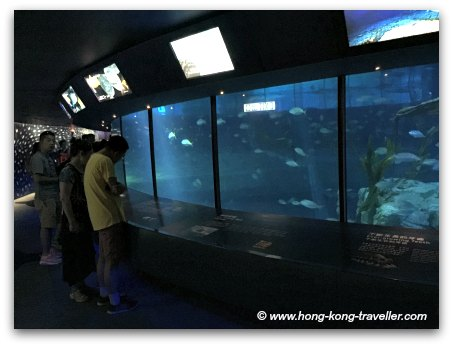 Ocean Park Shark Mystique underwater viewing areas