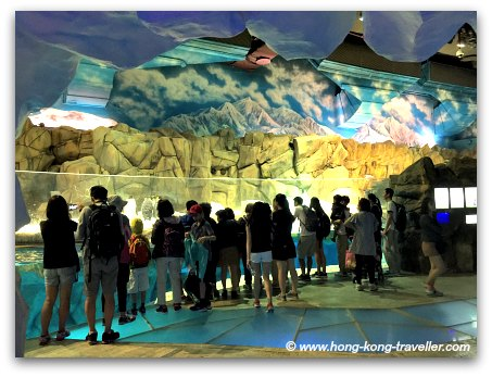 Ocean Park South Pole Spectacular Penguin Viewing Chamber