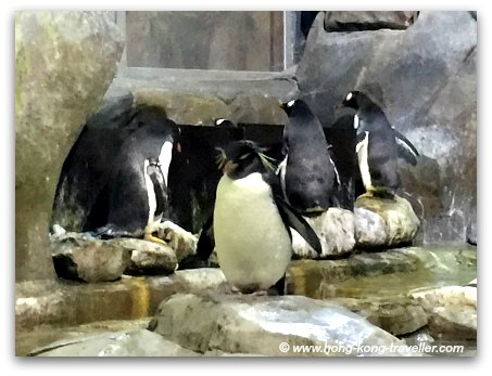 Ocean Park South Pole Spectacular Rockhopper and Gento Penguins