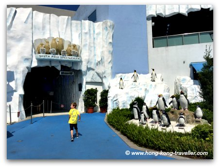 Ocean Park South Pole Spectacular, this is where the Penguins are!