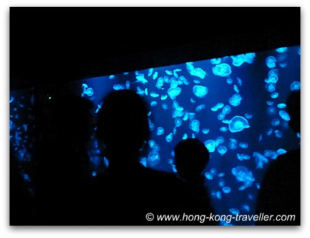 Sea Jelly Spectacular Ocean Park Hong Kong