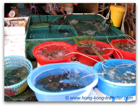 Hong Kong Seafood And Fish Markets