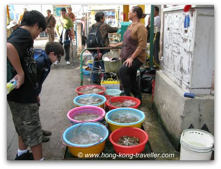 Hong Kong Seafood Markets