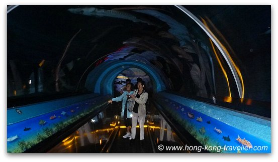 Chinese Sturgeon Tunnel Ocean Park