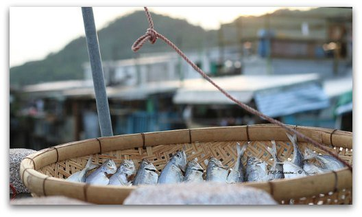Drying Fish in Tai O