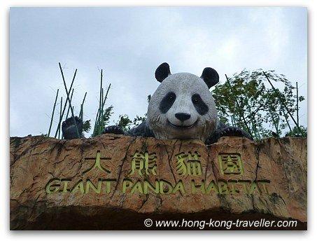 Giant Panda Habitat