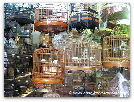stop cruelty towards birds