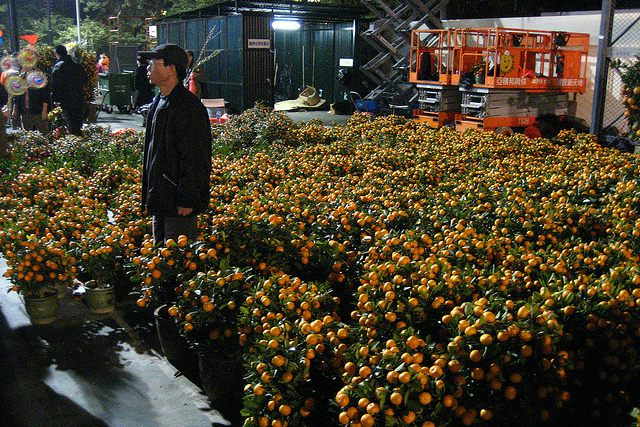 Mandarin Tree vendor at the Chinese New Year Flower Market