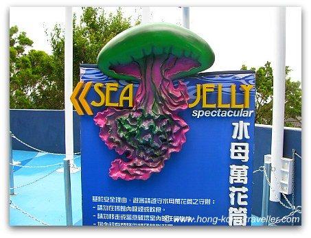 Jelly Fish Aquarium Ocean Park
