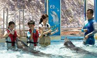Ocean Park Unique Activities - Dolphin Encounter