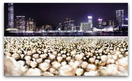 Light Rose Garden HK: 25000 LED roses lit up in the Harbour