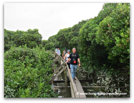 Mai Po Nature Reserve, the floating boardwalk that takes you to the mudflats of Inner Deep Bay