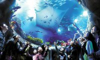 Ocean Park Hong Kong  Discount Tickets
