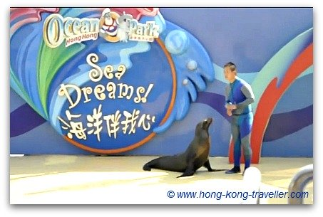 Ocean Park Dolphin and Sea Lion Show