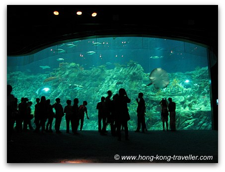 Ocean Park Grand Aquarium Viewing Pannel
