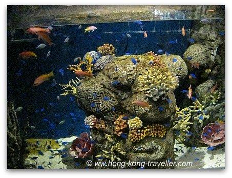 Ocean Park Reef Aquarium