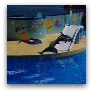 Ocean Park Highlights: Dolphin and Seal Shows