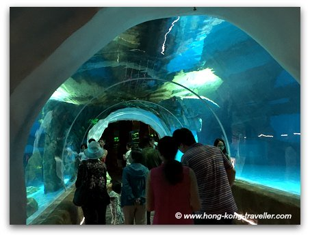 Ocean Park North Pole Encounter tunnels for underwater viewing
