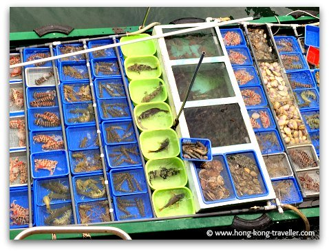 Fresh seafood being sold at the floating market in Sai Kung