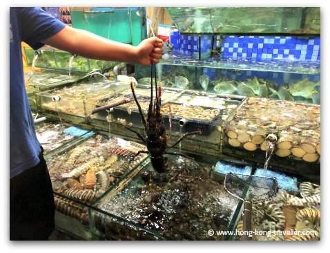 Picking your dinner at one of the many seafood restaurants in the Sai Kung waterfront